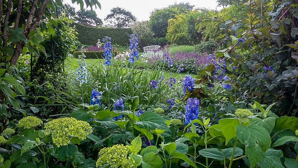 Rittersporn bringt Farbe in den Garten