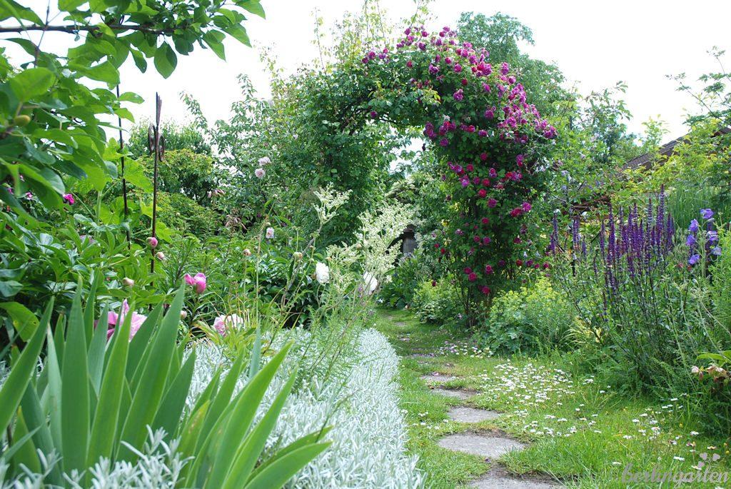Unterteilt den Garten und bringt Struktur: Rosenbogen mit Himmelsstürmer und New Dawn