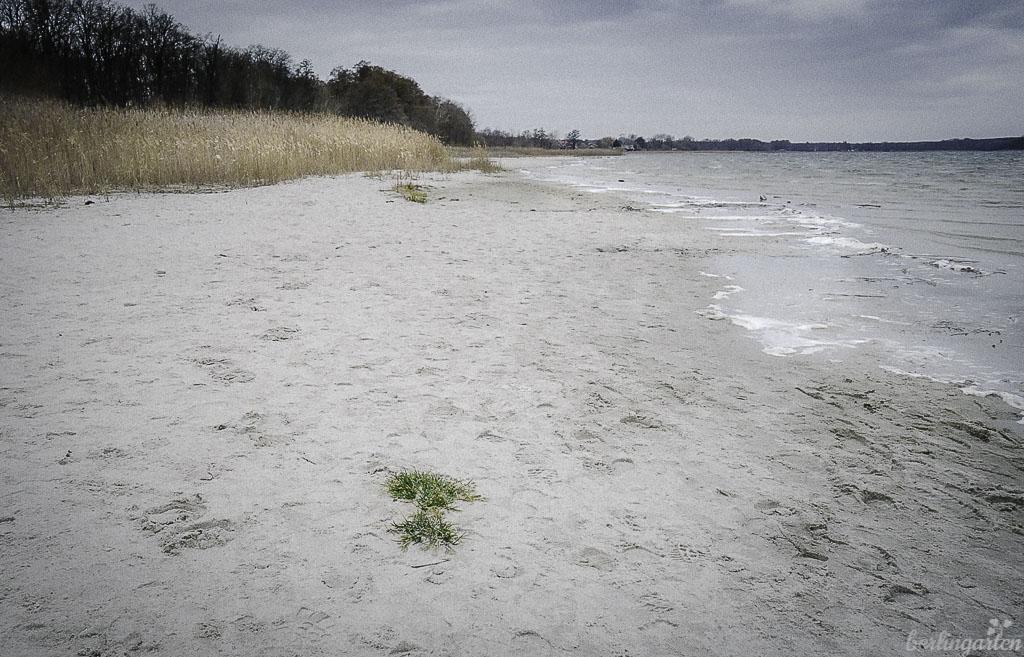 Am Großen Seddiner See gibt es einen Sandstrand zum Baden in Brandenburg