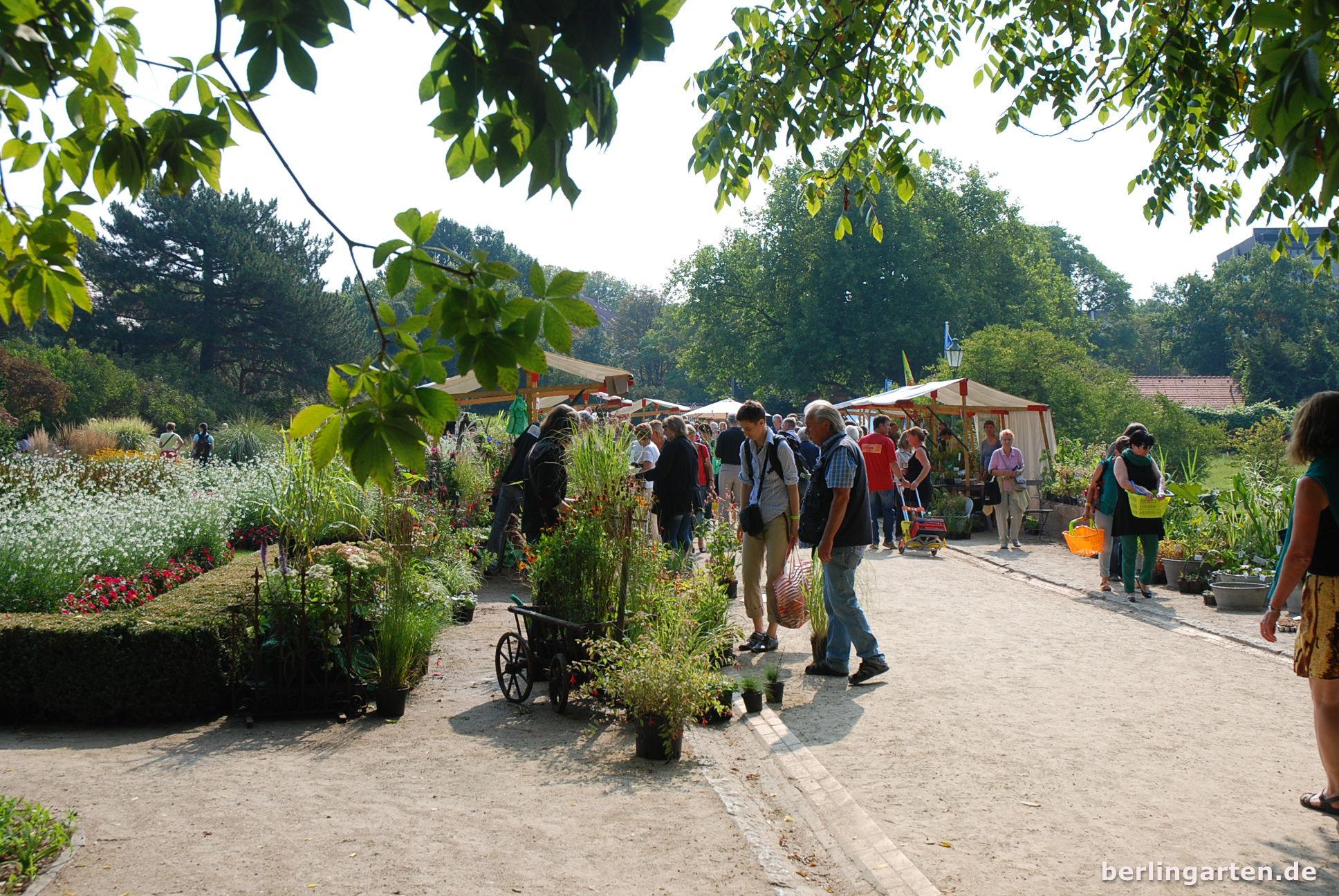 Serie Berliner Staudenmarkt Feels Like England Berlingarten