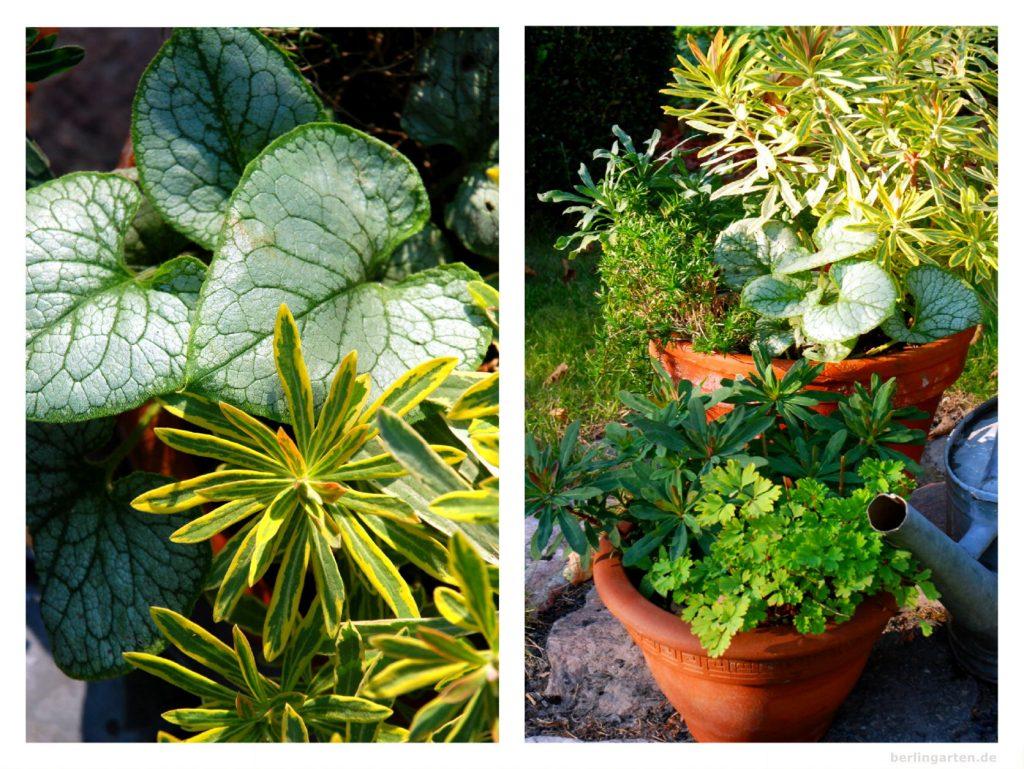 Das Ganze Jahr Schon Kubel Dauerhaft Bepflanzen Berlingarten