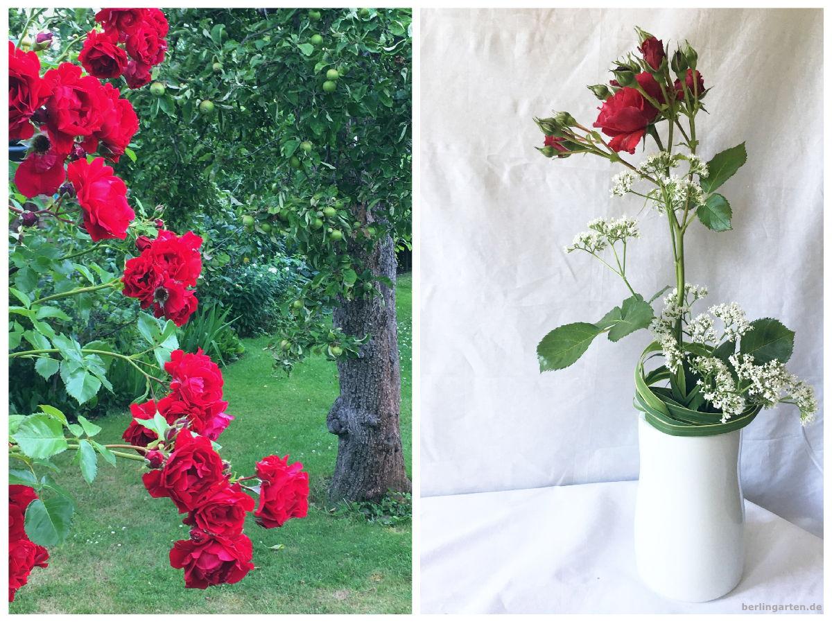 Titel Ikebana mit roter Rose