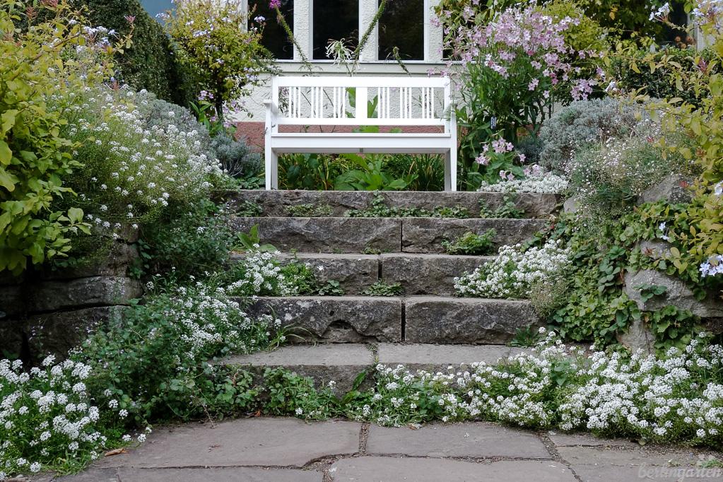 Treppen-Aussaat des Silberkrauts im Foerster-Garten