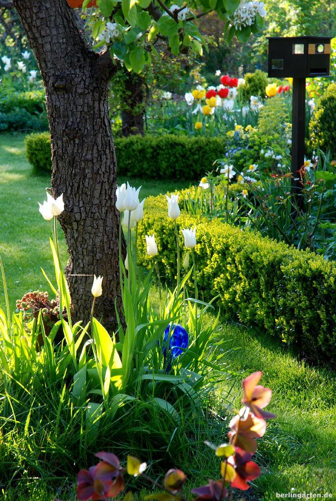 12tel blick april tulpen und baumbl te berlingarten. Black Bedroom Furniture Sets. Home Design Ideas