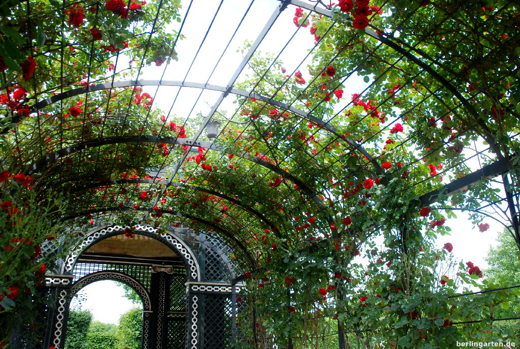 Und die roten Rosen duften sogar