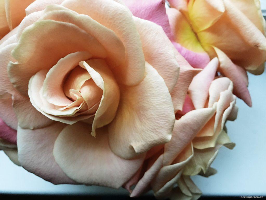 Bringen Licht ins Herz: pastellfarbene Rosen