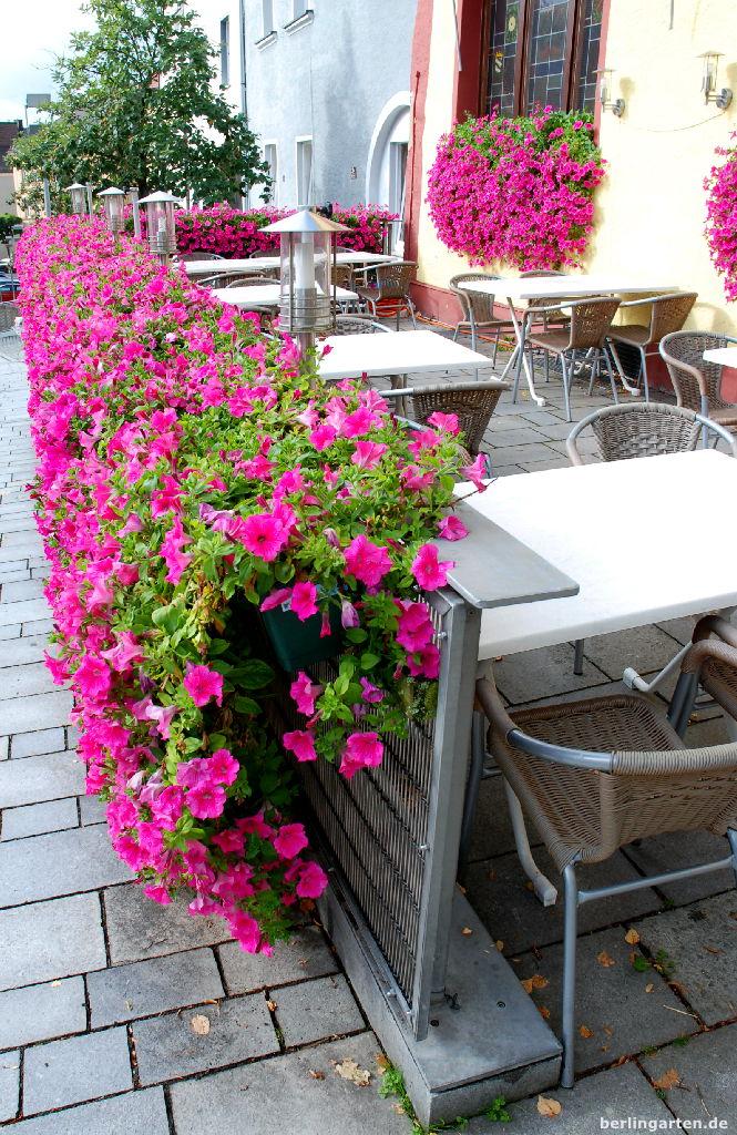 interview zur balkonbl tenpracht so geht 39 s mit surfinia petunien berlingarten. Black Bedroom Furniture Sets. Home Design Ideas
