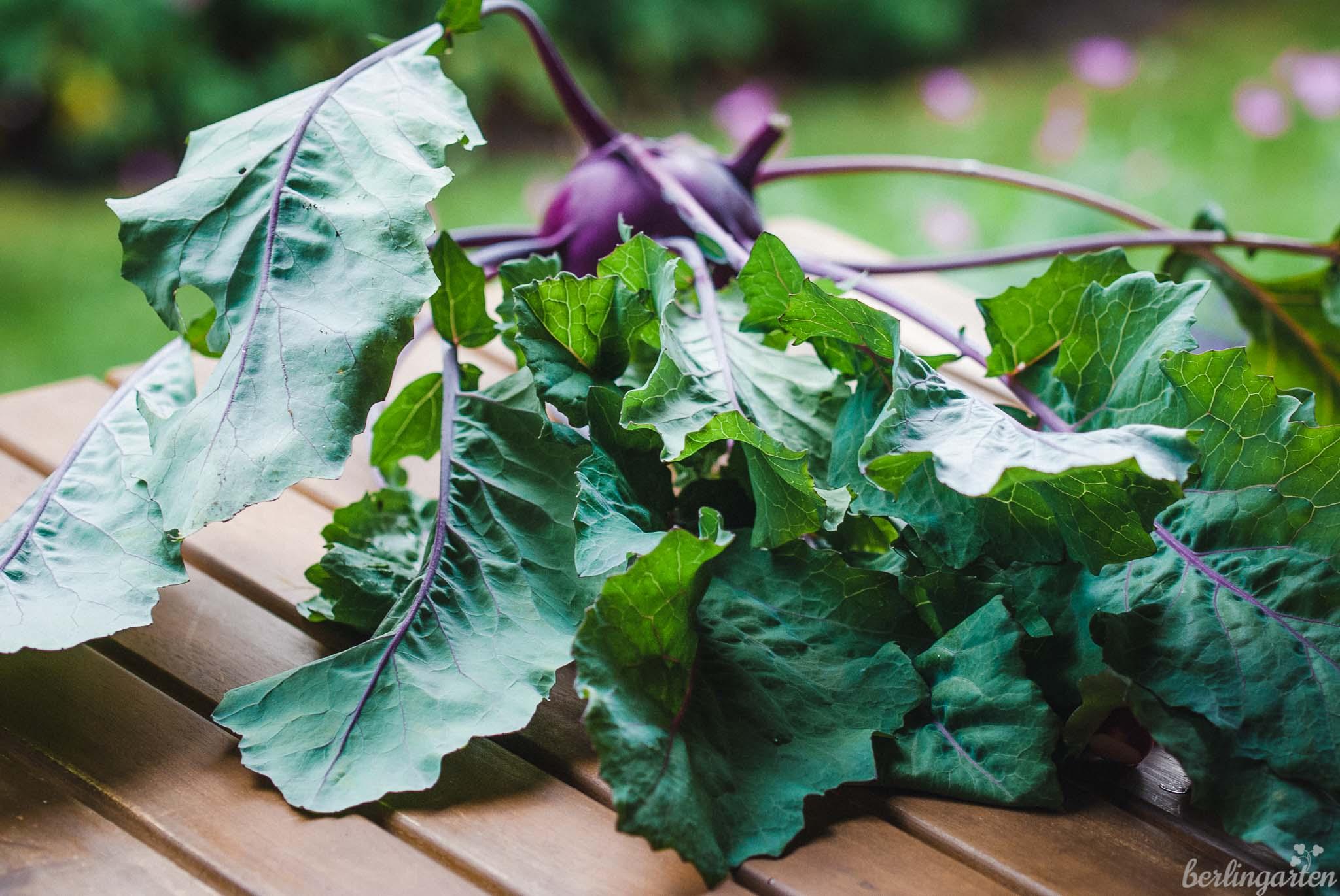 Kohlrabi-Blätter kann man essen